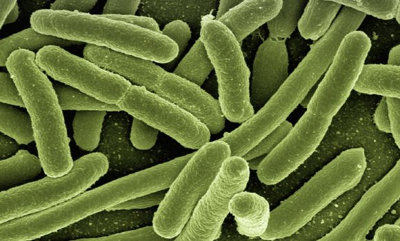 Local authority sentenced after member of public contracts Legionnaires' Disease